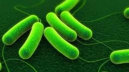 probiotic types