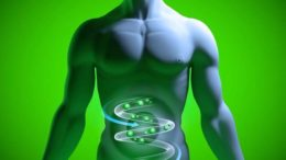 probiotics health being